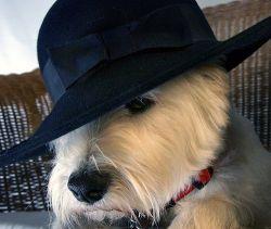 Champions Kutyakozmetikakutyakozmetika, állatkozmetika, állattenyésztés, kutyanyírás