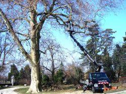 KARZO 2001 Kft- Petes Károlyfakivágás, emelőkosár, kéményjavítás, kosaras-autók, speciális kosaras emelő, veszélyes fák kivágása, villanyszerelés