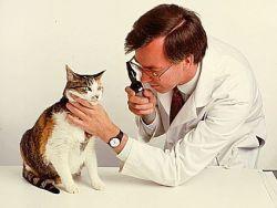 Dr. Sík Sándor állatorvos