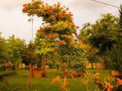 Innoplant Magyarország Bt. Pádár Zoltán kertészmérnök, kertépítő és fenntartó szakmérnökkertépítés, gyeptéglázás, gyomírtás, kerti tavak építése, öntözőrendszer, parképítés, szaktanácsadás, sziklakert